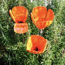 California Poppy Garden Sculptures