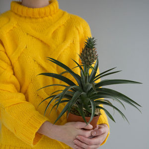 Exotic Indoor Pineapple Plant - for the whole family
