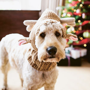Santa's Little Helper Reindeer Dog Hat - gifts for pets