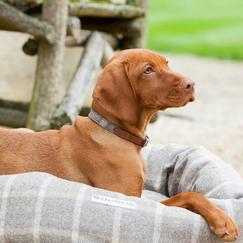 Slate Tweed Dog Collar And Tan Lead