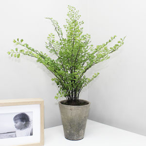 Artificial Maiden Fern Plant - plants & trees
