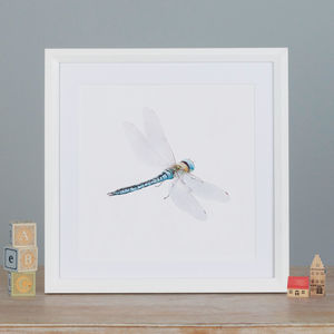 Illustrated Dragonfly Print