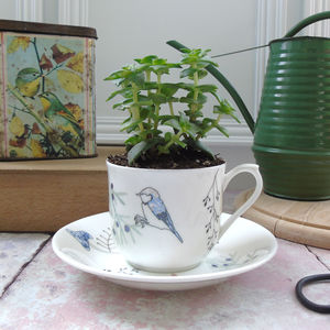 Teacup And Saucer Planter