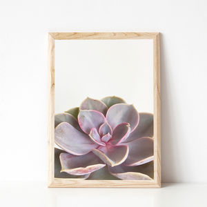 Purple Succulent Botanical Photographic Print - still life