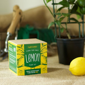 Grow Your Own Lemon Tree Plant Kit - gardening