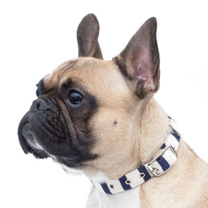 Breton Stripe Dog Collar - dogs