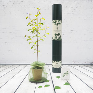 Silver Birch 'Tree Of Celebrations' Gift - gardener