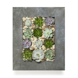 Grande Living Wall Succulent Planter