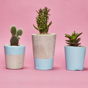 Light Blue Concrete Plant Pot With Cactus Or Succulent - gardening