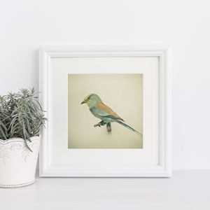Bird Study Ii Photographic Still Life Print