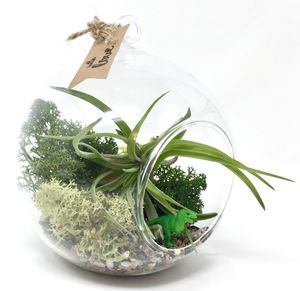 Trex Air Plant Terrarium Kit