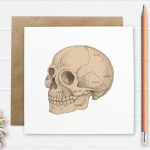 Anatomical Skull Illustration Greetings Card
