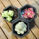 Hexagon Shaped Concrete Black Planter