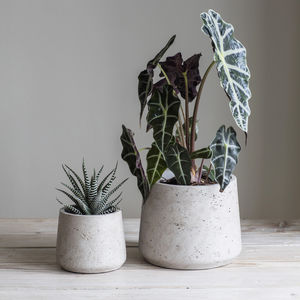 Cement Plant Pot Set - pots & planters