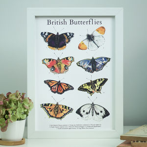 British Butterflies Illustrated Guide Art Print
