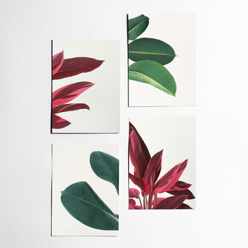 Set Of Four Leaf Postcards With Envelopes. Leaves
