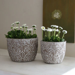 Whitewashed Damask Cement Pot With Bulbs - fresh & alternative flowers