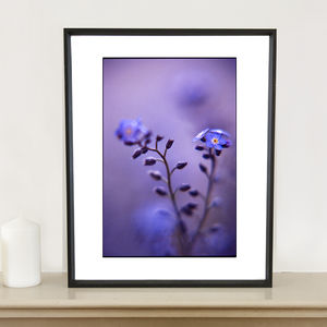 Blue Myosotis I Photographic Art Print