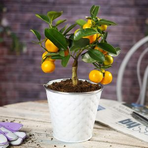 Mini Orange Fruit Tree With Decorative Pot - home accessories
