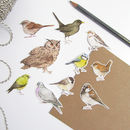Watercolour Bird Stickers