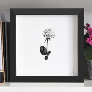 Rose Flower Print - drawings & illustrations