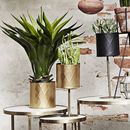 Gold Metal Harlequin Pattern Planters Set