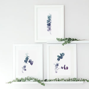Set Of Three Botanical Eucalyptus Leaf Prints