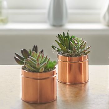 Copper Coloured Tin Of Succulents
