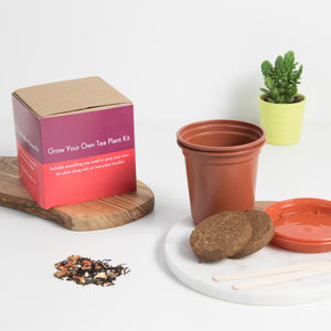 Grow Your Own Tea Plant - drink kits