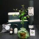 Gardener's Trio Of Trees Gift Hamper