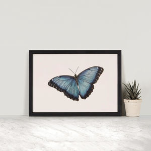 Blue Morpho Butterfly Illustration Print - posters & prints