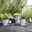 Zinc Mini Watering Can Planters