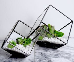 Square Terrarium With Planting Set - room decorations