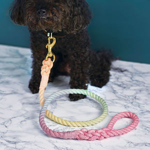 Pastel Rainbow Rope Dog Lead - walking