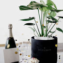 Monstera House Plant In Gift Box