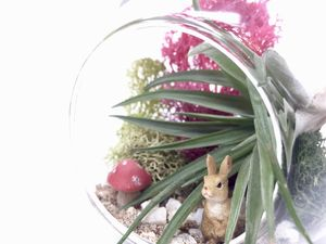 Fairy Garden Air Plant Kit