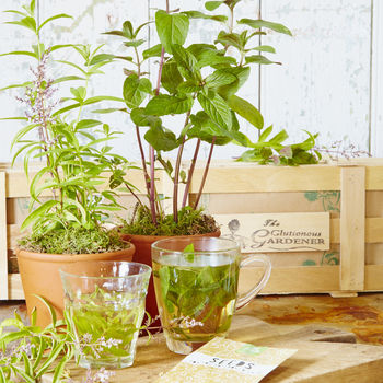 The Herb Tea Gift Crate