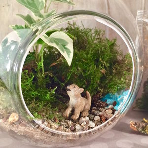 Wolf Diy Terrarium Kit
