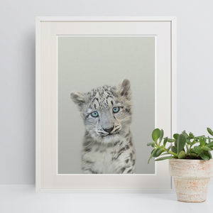 Snow Leopard Peekaboo Animal Print - nursery pictures & prints
