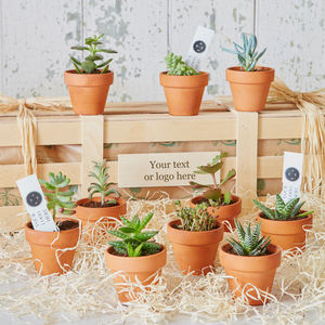Personalised Corporate Succulent Set