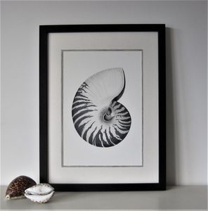 Framed Limited Edition Nautilus Shell Giclee Print - still life