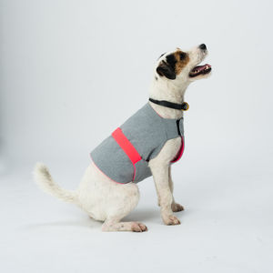 Cooling Summer Dog Coat - what's new