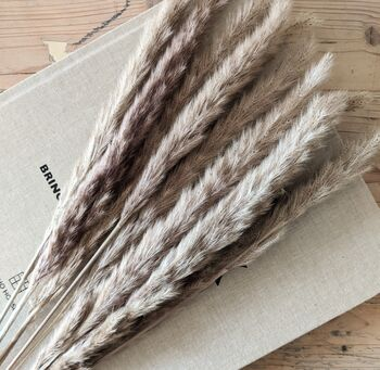 Dried Grass Miscanthus Floridulus