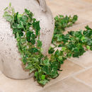 Set Of Two Plant Power Garden Foliage Garlands