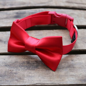 Satin Dog Collar With Bowtie - dogs