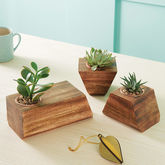 Jigsaw Succulent Holder - garden
