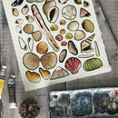 Seashells Of Britain Art Blank Greeting Card
