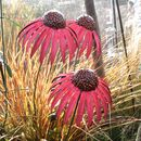Set Of Three Echinacea Flower Sculptures