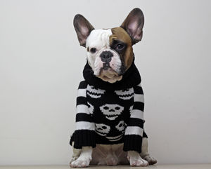 Day Of The Dead Skull Dog Jumper - clothes