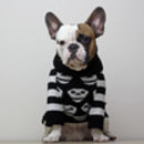 Day Of The Dead Skull Dog Jumper